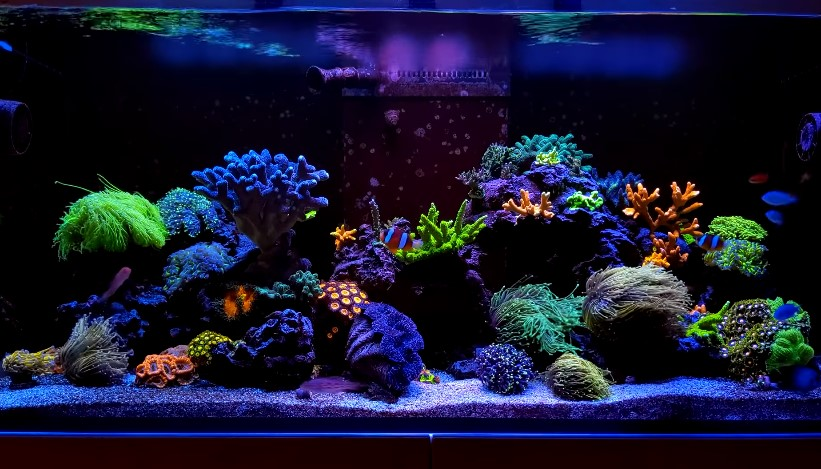 How to Raise pH in a Reef Tank?