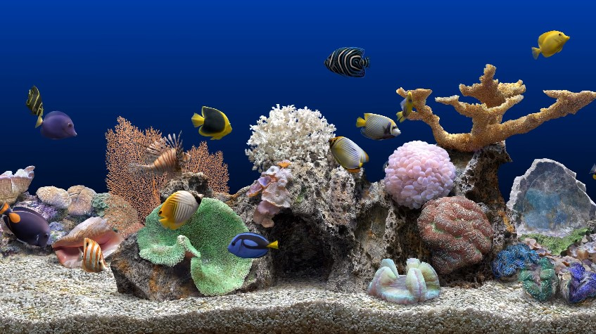 How to Correctly Take Care of a Saltwater Fish Tank