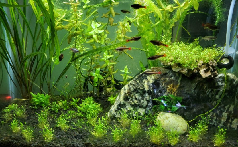15 Cold Water Aquarium Fish - Types of, Set up & Care