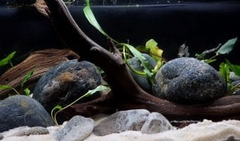 How to Clean Sand in Aquarium?