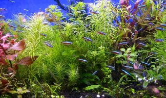 How to Grow Plants in Aquarium?