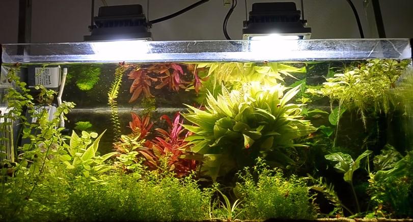 Lighting the tank