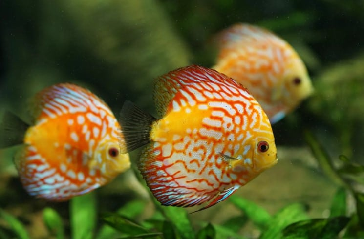 Do Fish Need Light in Aquarium?