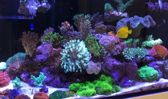 How to Lower Phosphate in Reef Tank?