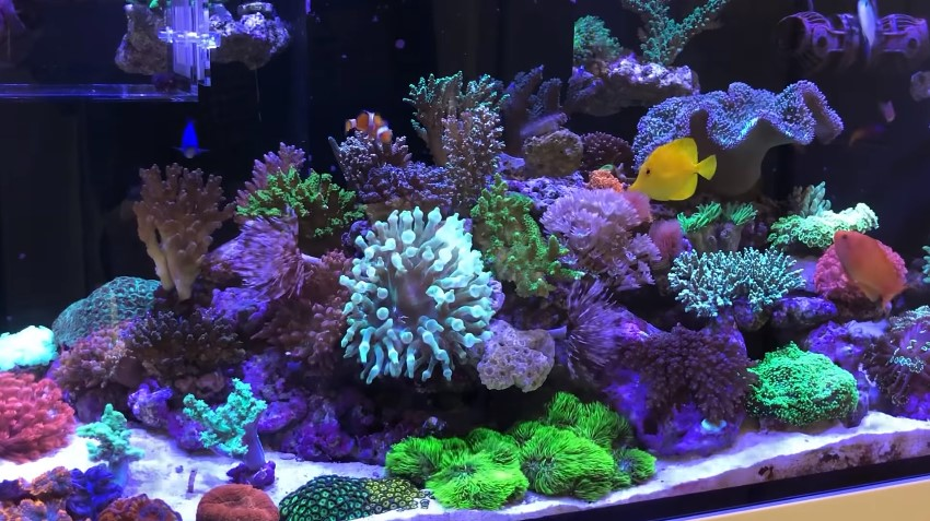 How to Lower Phosphate in Reef Tank