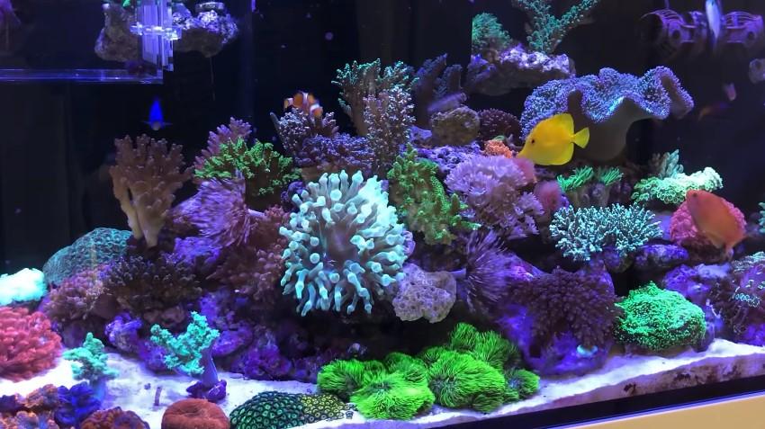 How to Lower Phosphate in Reef Tank