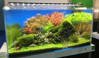 Planted Aquarium LED Lighting Guide