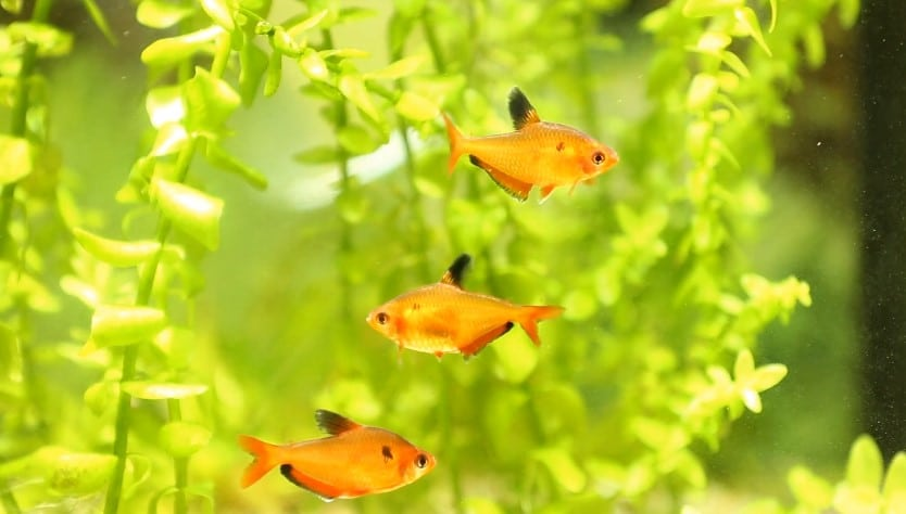 How to Lower Ammonia Levels in a Fish Tank