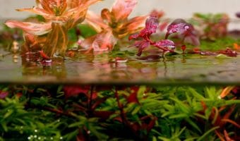 Benefits of Live Plants in Aquarium