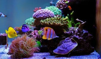 How Much Salt Per Gallon for Saltwater Aquarium?