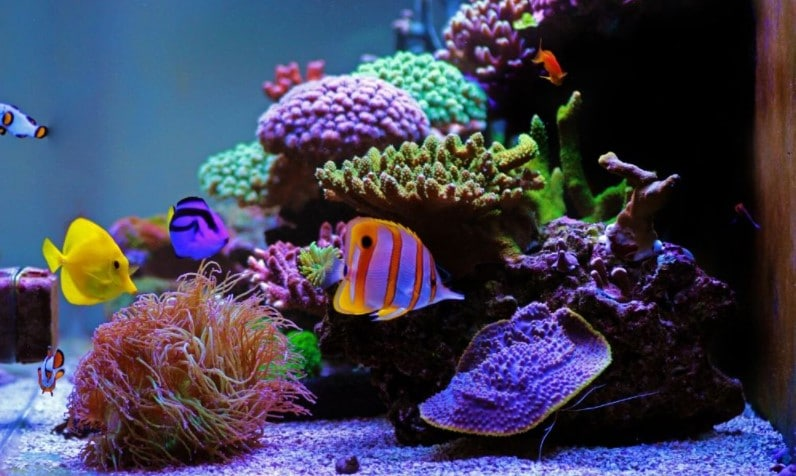 How Much Salt Per Gallon for Saltwater Aquarium