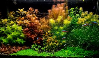 How to Reduce Water Hardness in Aquarium