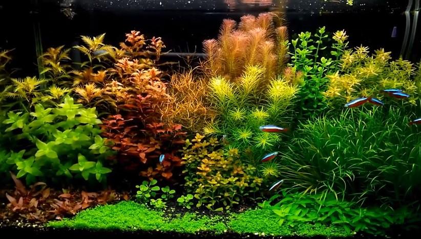 How to Reduce Water Hardness in Aquarium