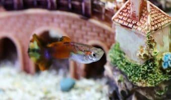 How to Clean Algae off Aquarium Decorations