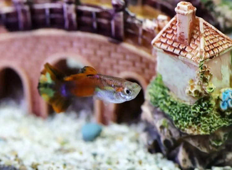 How to Clean Algae Off Aquarium Decorations