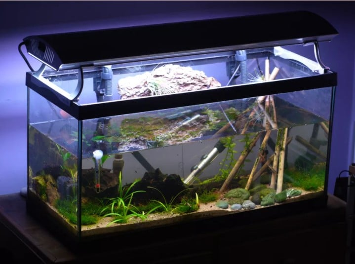 How to Read a Fish Tank Thermometer