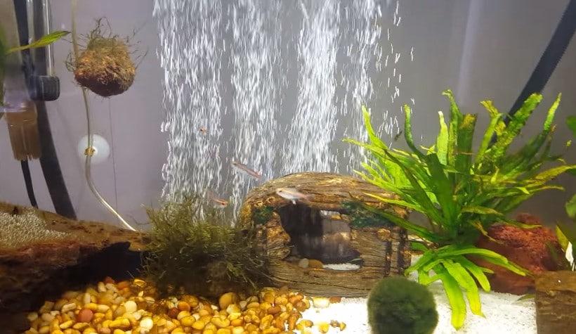 Hiding air stone in aquarium