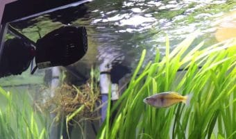 Do I need a wavemaker in my freshwater tank