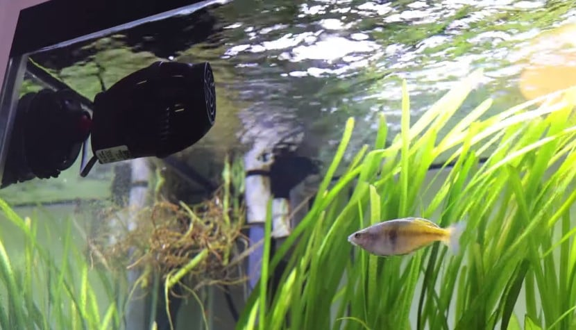 Where to Place Wavemaker in Freshwater Aquarium