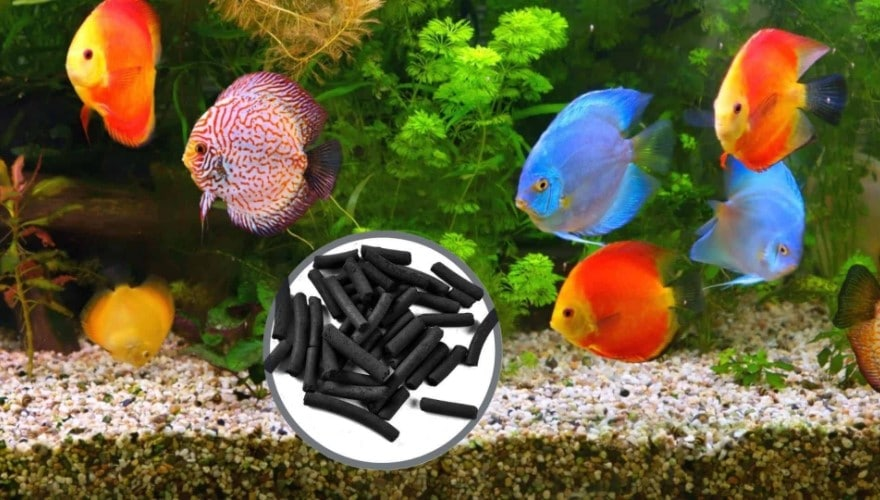How Often to Change Carbon Filter in Fish Tank?